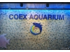 Korea - Day 5 - COEX Aquarium - 1