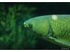 Korea - Day 5 - COEX Aquarium - 11