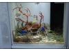 Korea - Day 5 - COEX Aquarium - 25
