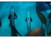 Korea - Day 5 - COEX Aquarium - 45