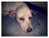 cny_2010_dog