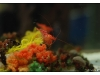 Korea - Day 5 - COEX Aquarium - 19