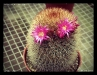 cameron_cactus