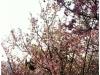 taiwan_03032012_063